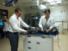 Dr. Pozzi and patient